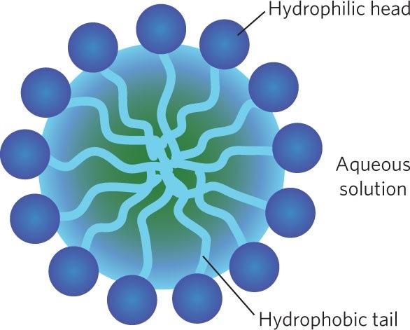 surfactant ที่ห่อหุ้มขมิ้นชันละลายน้ำ เพื่อเข้าไปรักษา กรดไหลย้อน