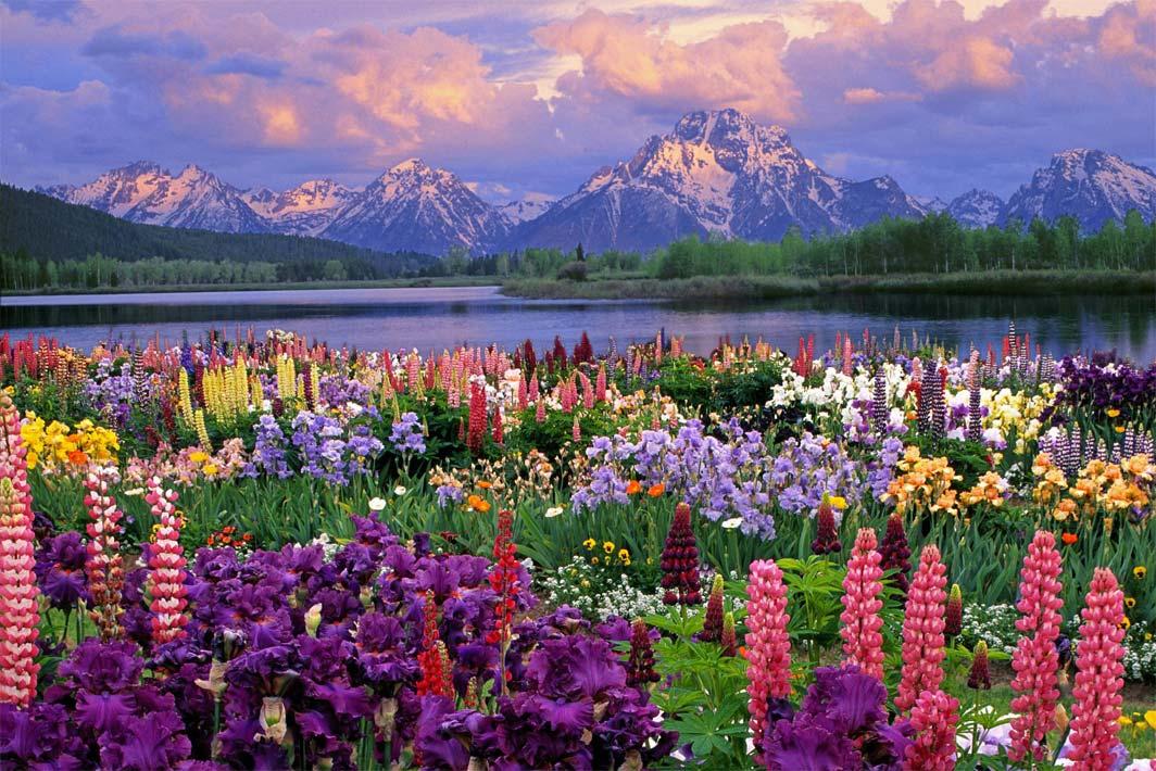 หัวน้ำหอมกลิ่น garden flower : 002439