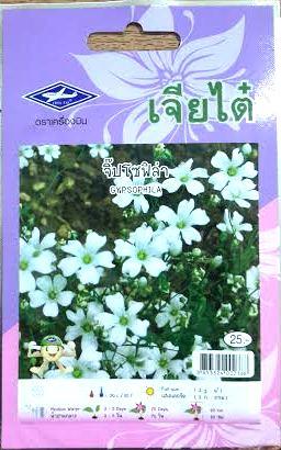 ดอกจิ๊ปโซ่ฟิล่า Gypsophila เจียใต๋